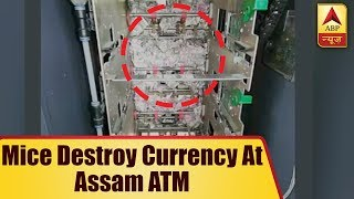 Mice Destroy Currency Worth Rs 12 Lakh at Assam ATM | ABP News - ABPNEWSTV