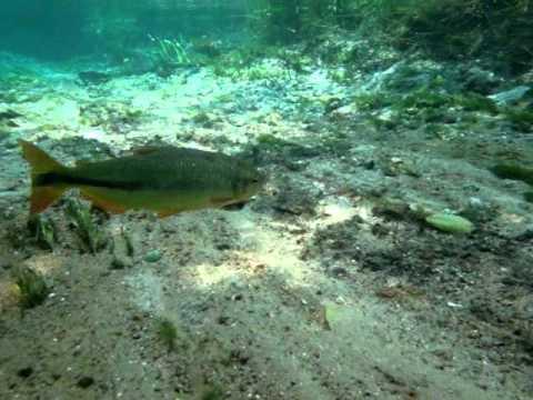Flutuação no Rio Sucuri / Snorkeling the Anaconda River