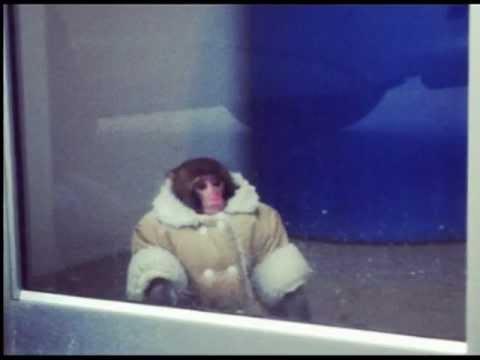 IKEA Monkey