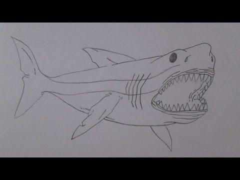 Como desenhar um tubarão branco gigante