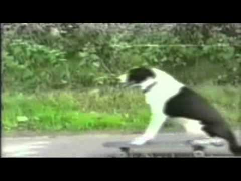 Funny Bicycle Bloopers and Crashes