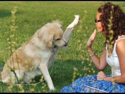 How to Train Your Dog - Dog Training Tips For Obedience Training Video