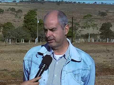 Estância São Luiz, propriedade modelo em produção leiteira da raça Girolando