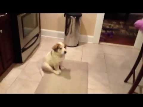 Teaching Puppy How To Catch