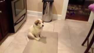 כלב לומד לתפוס