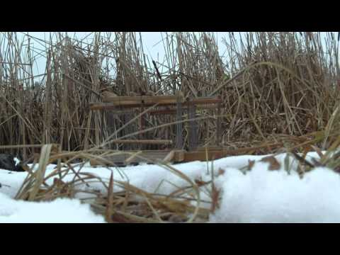 Ловля полевого жаворонка на драку 12042013