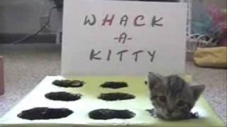 Whack-A-Kitty