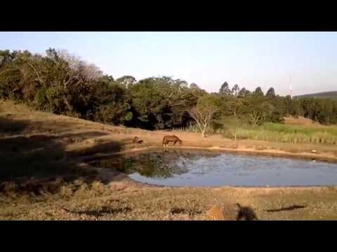 Reflorestamento com espécies brasileiras nobres