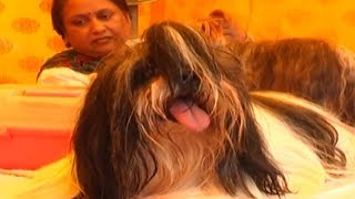 Grooming parlour for pets in Indore's government veterinary hospital - TIMESOFINDIACHANNEL