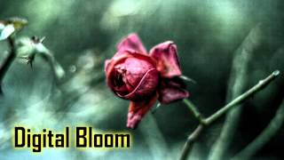 Royalty Free :Digital Bloom
