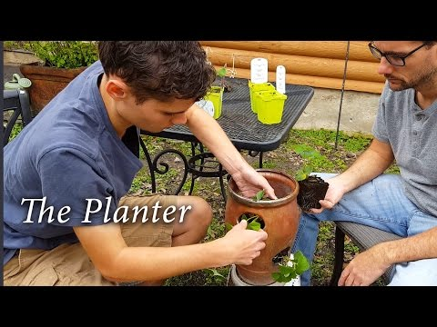 Luke Plants Strawberries! - Gardening With Special Needs