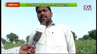 Cotton Farmers Facing Lack of Problems | Sanga Reddy | CVR News - CVRNEWSOFFICIAL