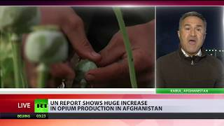 Afghan opium production almost doubles in 2017 – UN - RUSSIATODAY
