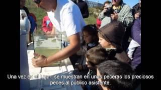 El pasado Domingo 28 de Octubre de 2012 la Asociación Ecometta colaboró en el acto en el que se dio a conocer el proyecto al numeroso público familiar en el cual la Sociedad de Estudios Ictiológicos, continua ayudando a ese pequeño pez llamado Fartet, a sobrevivir como especie autóctona en peligro de extinción.