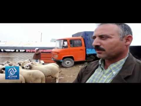 Les moutons d'Al Aîd au souk de Arouit - Nador