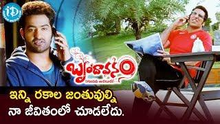 ఇన్ని రకాల జంతువుల్ని నా జీవితంలో చూడలేదు - Brindavanam Movie Comedy Scene | NTR | Kajal | Samantha - IDREAMMOVIES