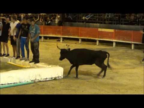 Related video for Toro piscine labat