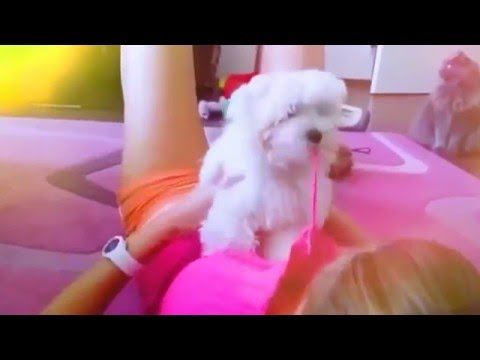 Hot Babe plays with Dog ~ Funny Sexy Video of Cam Girl!!! - يوتيوبات