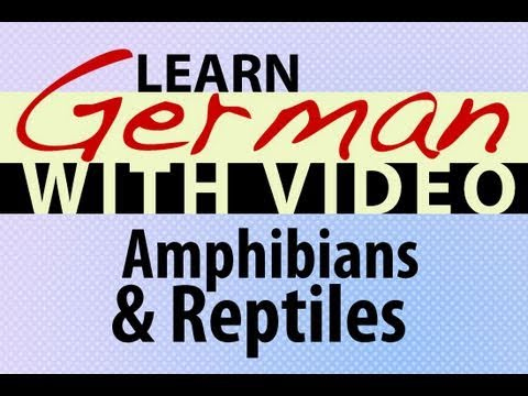 Learn German with Video - Amphibians and Reptiles