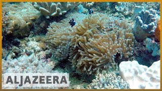 🇰🇪How do coral reefs benefit Kenya's economy? l Al Jazeera English - ALJAZEERAENGLISH