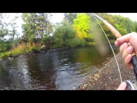 River Alness Autumn Grilse