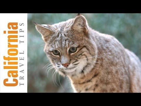 Desert Animals - The Living Desert