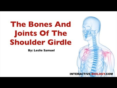 073 The Bones And Joints Of The Shoulder Girdle