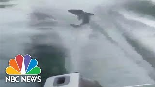 Police Charge Men With Animal Cruelty After Shark Dragging Video | NBC News - NBCNEWS