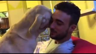 Quiso retar a su perro mira lo que recibió