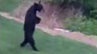 Hunter Files Defamation Suit in 'Walking' Bear Killing - WSJDIGITALNETWORK