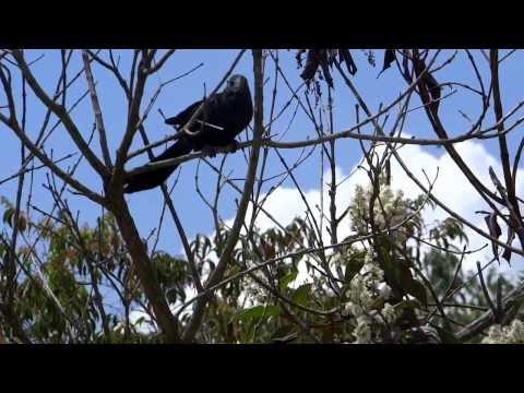 HORMIGAS CULONAS.VIDEO No 3