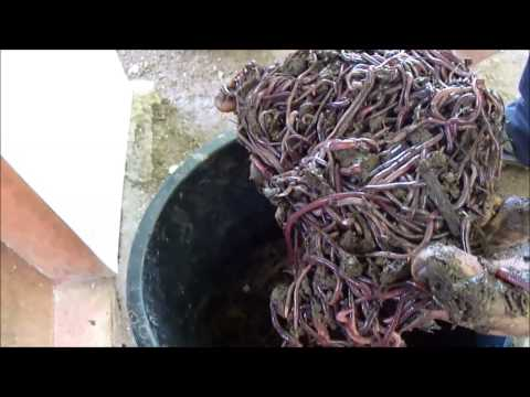 Vermiculture in the Philippines