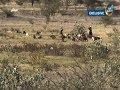 نشرة أخبار التاسعة مساءً | كاميرا الغد المشرق توثق انتهاكات مليشيا الحوثي في باجة حجر(13 نوفمبر)