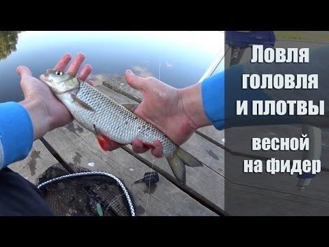 фидерная ловля белой рыбы на видео