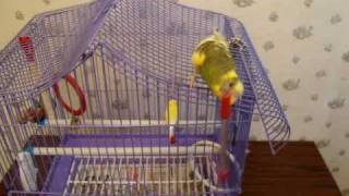 Попугай и меч-кладенец