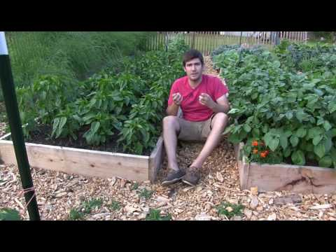 How we Grow a Massive Garden and RARELY Have to Water!