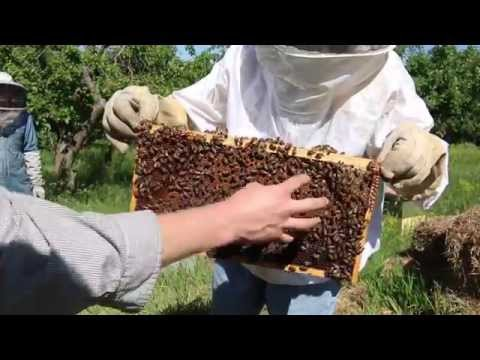 Beekeeping 101: Handling a Beehive - Part 1 - Full Course at Organic Life Guru