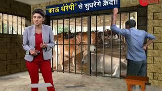 Aapki News: 'Cow therapy' to reform prisoners in Haryana jails | गाय को मिलेगा सुरक्षा कवच - ZEENEWS