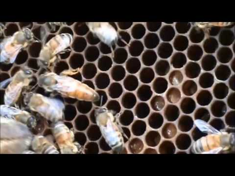 Flow Hive Brood Frame Spacing: This Is MY Recommendation.