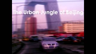 Royalty Free :The Urban Jungle of Beijing