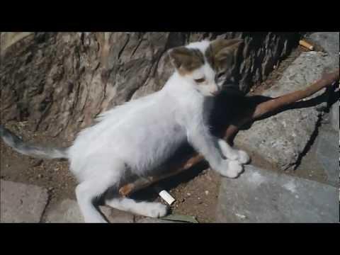Man Kicks Kitten
