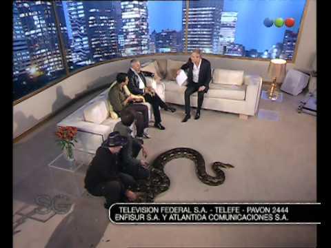 Pitón Reticulada - Susana Giménez