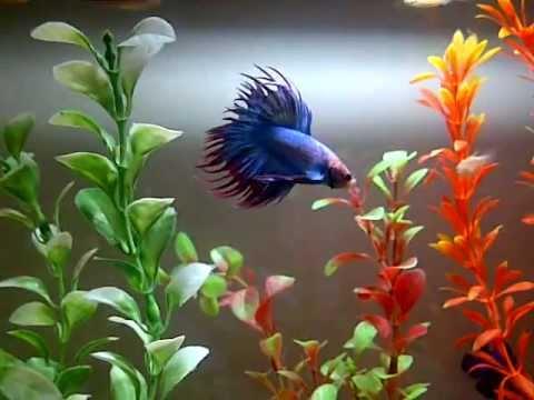 Mi pecera de peces tropicales