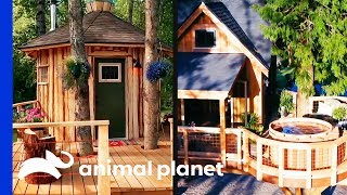 Super Chill Sauna vs. Hot Tub Rumpus Room! | Treehouse Masters - ANIMALPLANETTV