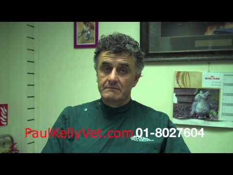 Male Cat Castration Paul Kelly Veterinary Surgeon