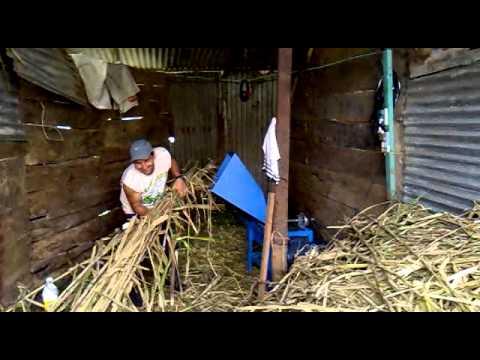 picadora de pasto mediana (king grass)