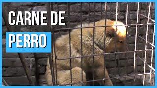 Comercio de carne de perro en China (Imágenes fuertes)