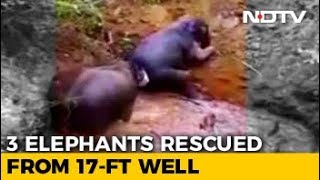 Watch: 3 Elephants Fall Into Well In Tamil Nadu, Rescued In 6 Hours - NDTV