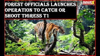 Forest officials launches operation to catch or shoot tigress T1 and catch her two cubs alive - NEWSXLIVE