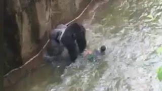 Gorilla drags 3-year-old in shocking video - CNN